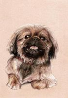 Lilu now in pencil by clotus