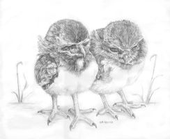 Burrowing Owl Chicks by Typthis