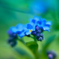 sentimental blue by PatiMakowska