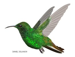 emerald hummingbird by Tolomuco