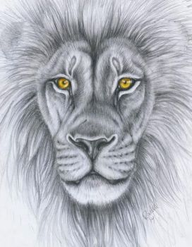 Lion drawing by punxnotdead309