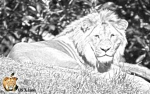 OS 10.7 Lion by Wretched-Bones