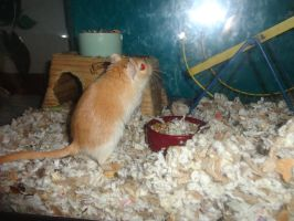 Fabio the gerbil 1 by LOST09