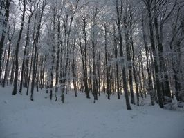winterforest VIII by mimose-stock