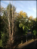 Autumn in Nikopol. View from my balkony by Vipra-Ur