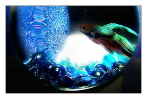 Poltergeist  a Fish Story by aquapell