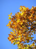 Colors of autumn by pekauppi
