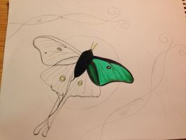 Moth on a Winter Night WIP I by EmaleeAnderART