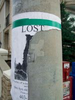 lost cat or dog by lonnietaylor