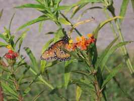 Butterfly Garden 2 by Fully-Stocked