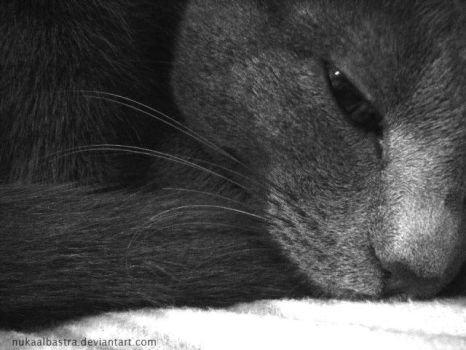 Russian Blue Muzzle by nukaalbastra