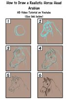How to Draw a Realistic Horse Head- Arabian by SavannaW