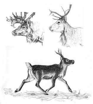 Reindeer drawings by Brie91