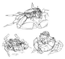 Crabmersible Roughs by thomastapir