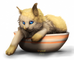 Have nice little cup full of purr by Grypwolf