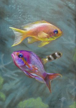 Tropical Fish Study by lunarsparks