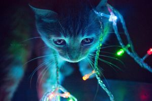 +KittyBokeh by hellonata