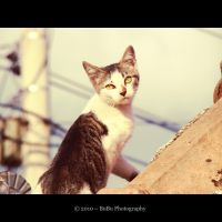 .:Rooftop Kitty:. by bogdanici