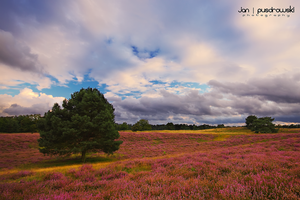 Purple Haze by JanPusdrowski