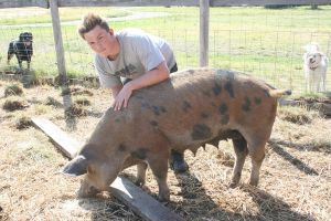 Pigs - Big Mama by ComsumedDarkness