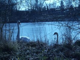 Swan Pond 7 - Scout The Area by Forsaken737