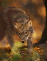 Wolf pup - gift art by FalyneVarger