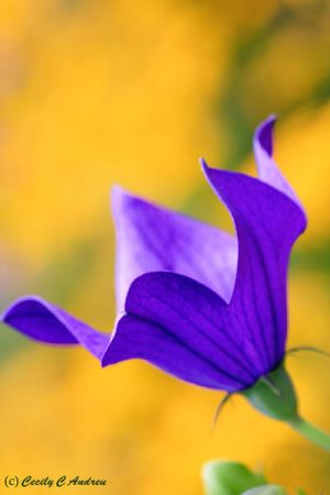 Purple And Yellow by CecilyAndreuArtwork