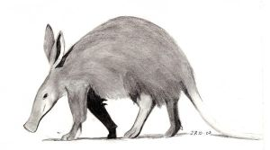Aardvark by cha-wa--darling