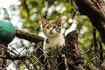 Set to Explore by Kitteh-Pawz