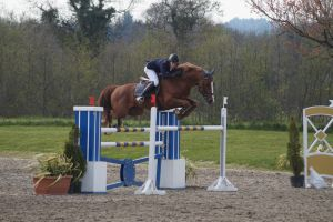 Chestnut Horse - Show Jumping stock - 11.7 by MagicLecktra