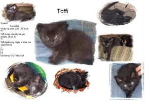 toffi by dontmesswithmy