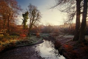 Minnowburn River in Autumn Sun by Gerard1972