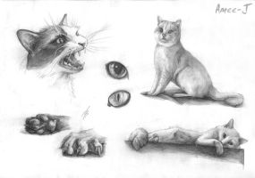 Cats by Amee-J