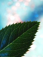 rose leaf by Aparazita-R