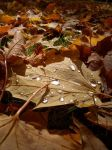 Fall leaves by Jodie72