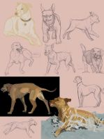 Dog Studies by StoryShepherd