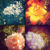 InstaFlowers: Love Comes in Four by Pyratesque