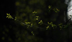 First leaves by Minyaloth