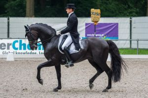 Dressage Stock - XXXIX by Summerly
