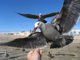 DO NOT FEED THE SEABIRDS by dproberts