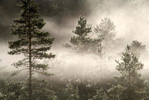 23.8.2013: Fog in the Forest by Suensyan