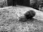 Little Snail black and white by AriesWildChild