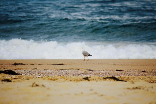 Seagull on the beach by apparate