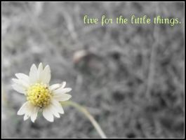 live for the little things. by Brookiiee-Jayy