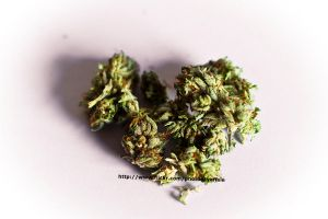 Herbal Love by Abfc