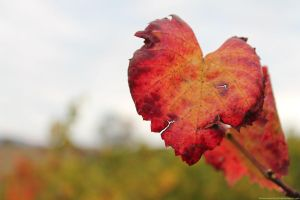 Autumn Hearts by buttons-and-bicycles
