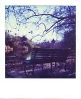 bench in the park by lloydhughes