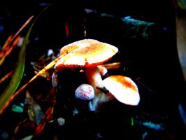 Mushrooms by our-lady-of-sorrows1