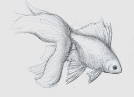 Goldfish sketch by ClaireAiko