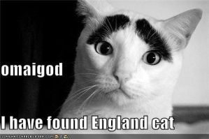 I just found England cat 8D by That-Wacky-Whovian